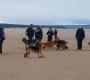 SC dog walk, Tentsmuir Forest, Cupar, Fife