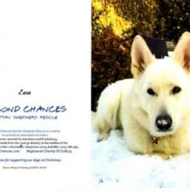 Our christmas cards are now available, send some festive cheer